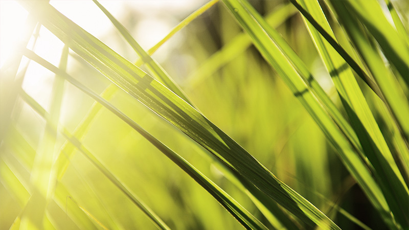 Prefere Resins Melamines Sustainability Low Formaldehyd